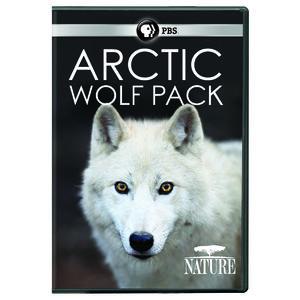 Nature: Arctic Wolf Pack