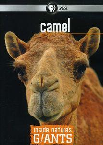 Inside Nature's Giants: Camel