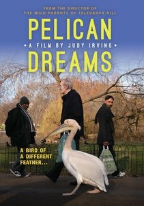 Pelican Dreams