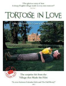 Tortoise in Love