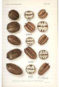 Modern Marvels: Nuts