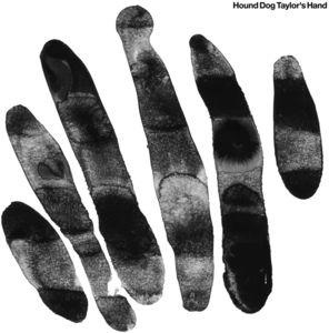 Hound Dog Taylor's Hand