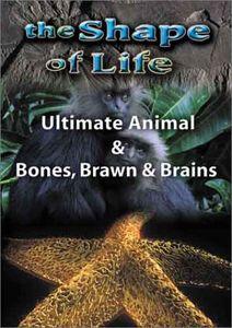 Shape of Life 4: Ultimate Animal & Bones