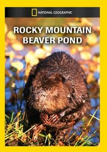 Rocky Mountain Beaver Pond