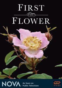 Nova: First Flower