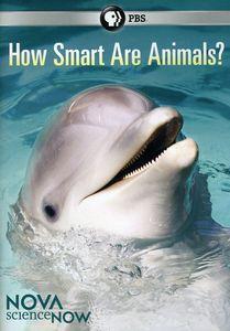 Nova scienceNOW: How Smart Are Animals?