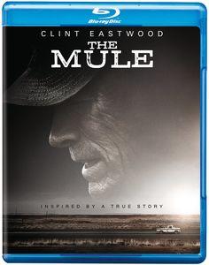 The Mule , Bradley Cooper