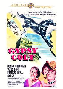 Gypsy Colt