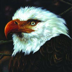 Hawk Is Howling , Mogwai