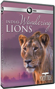 Nature: India's Wandering Lions