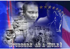 Stubborn as a Mule