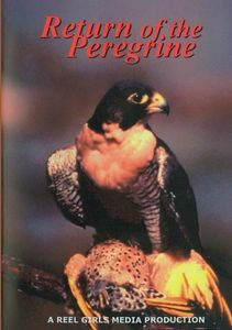 Return of the Peregrine