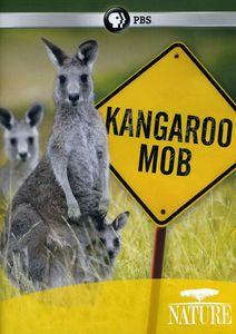 Nature: Kangaroo Mob