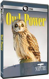 Nature: Owl Power