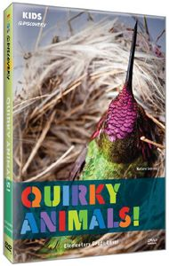 Quirky Animals