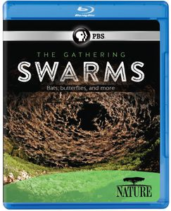Nature: The Gathering of Swarms