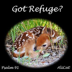 Got Refuge?