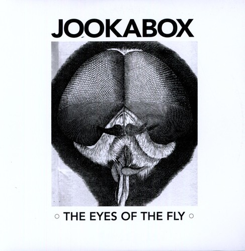 The Eyes Of The Fly
