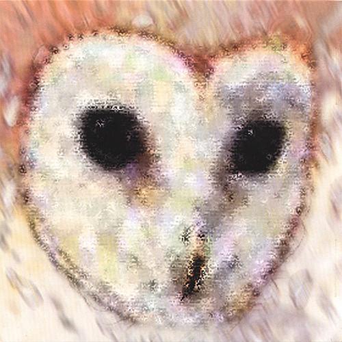 Dance Owl Night