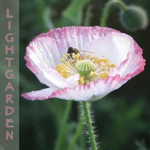 Lightgarden Meditations