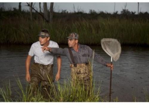 Swamp People: Cannibal Gator