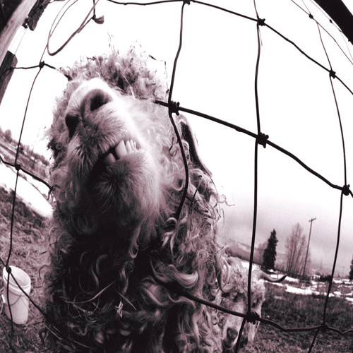 Pearl Jam-Vs. [Expanded Edition] [Bonus Track]