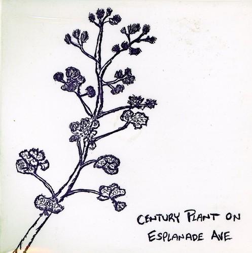 Century Plant on Esplanade Ave