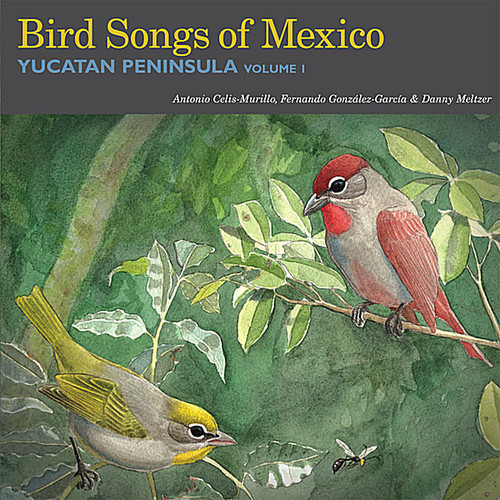 Bird Songs of Mexico: Yucatan Peninsula 1