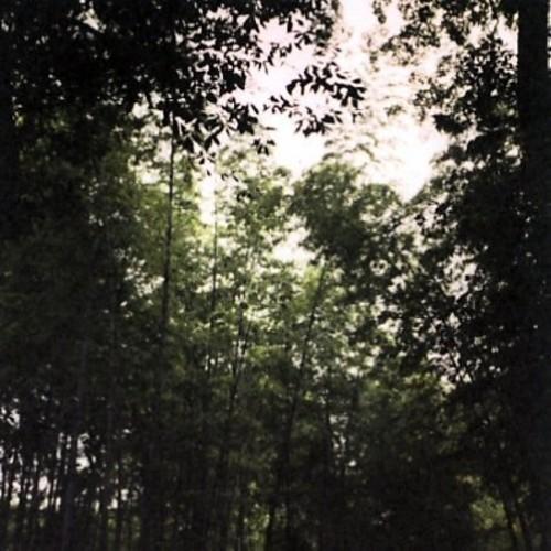 Wooden Spires